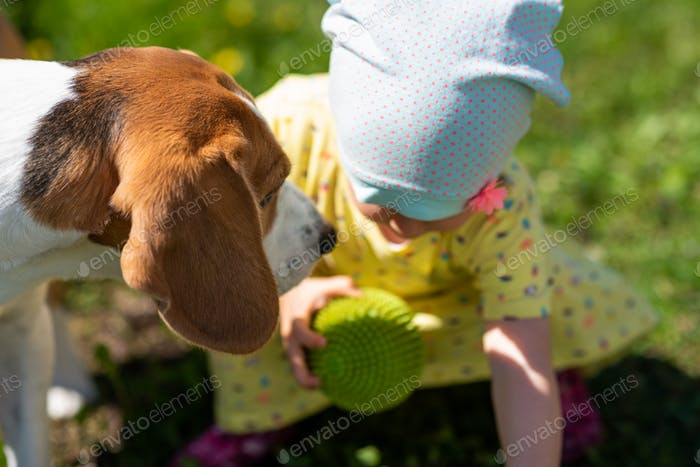 Baby girl plays with Beagle dog