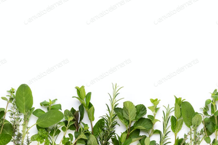 Spice plant isolated on white background.