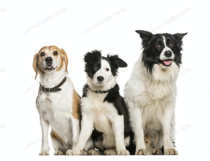 three dogs sitting in the raw, cut out