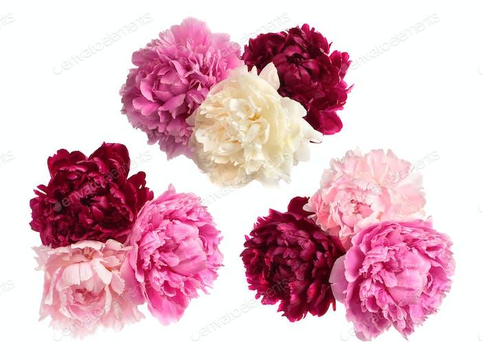 Set of three peonies bouquets