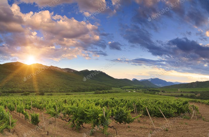 Beautiful sunset sky over a vineyard in the mountains