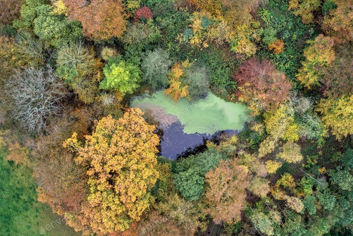 Colorful autumn forest seen from above