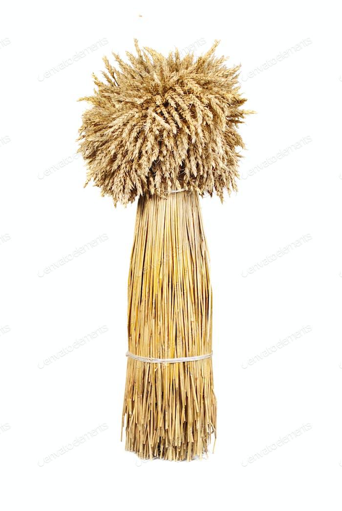 Garbe aus Weizen
