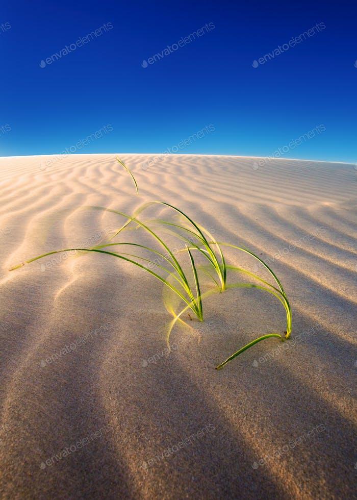 Sanddünen Wachstum