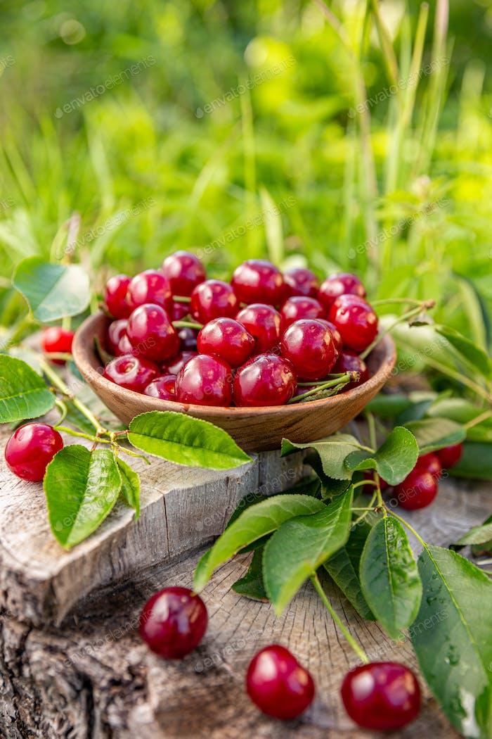 Bowl of fresh sour cherries