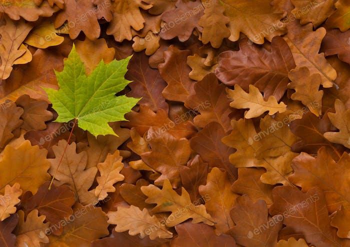 Green fresh fallen leaf on dead autumn bronze background