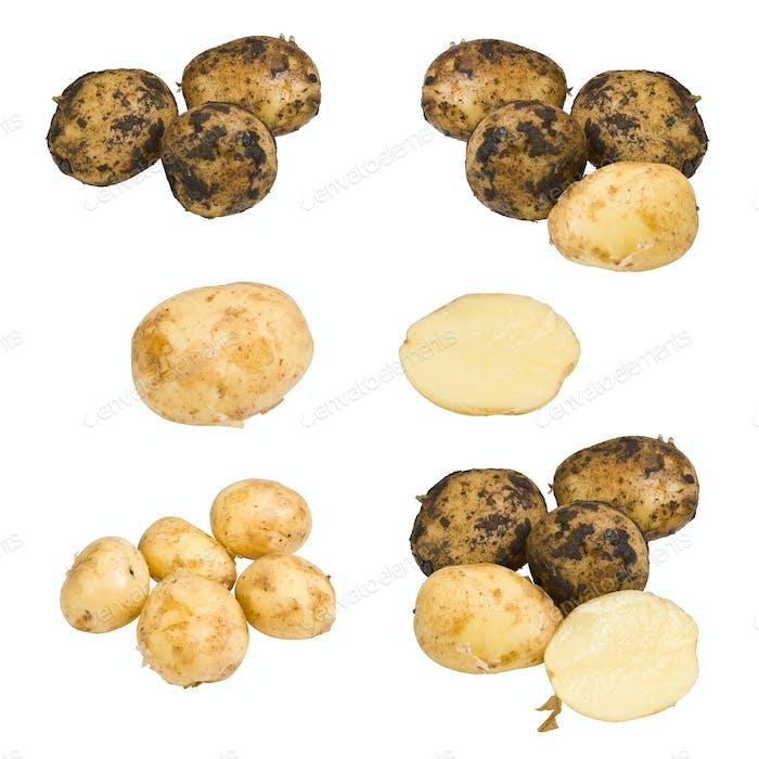 Collection of potato
