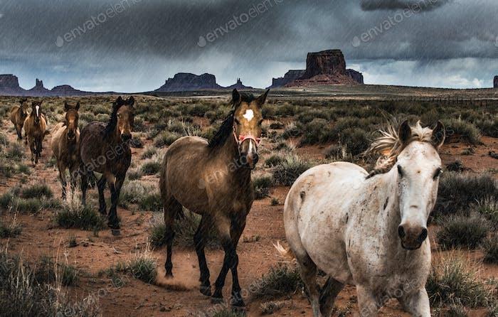 Pferde im Regen