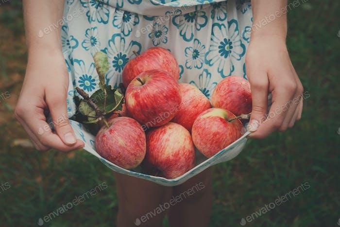 Mädchen hält Äpfel im Rock Saum