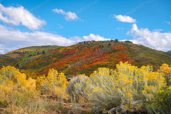 Park City, Utah, USA foliage along the Wasatch Back