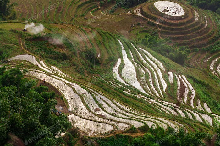 Rice terrace in northeast region of Vietnam