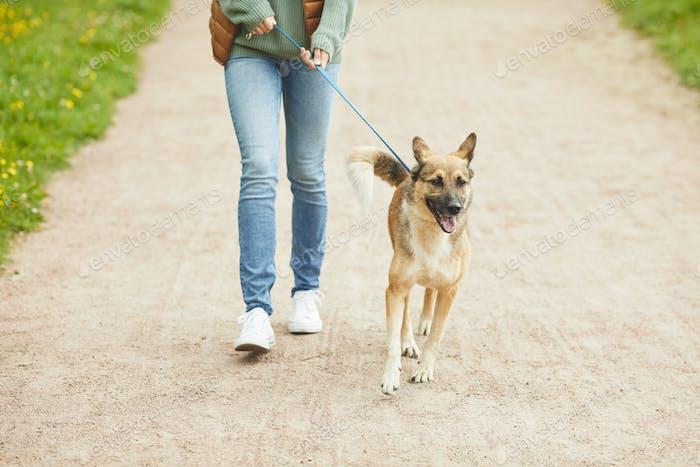 Propietario caminando con mascota