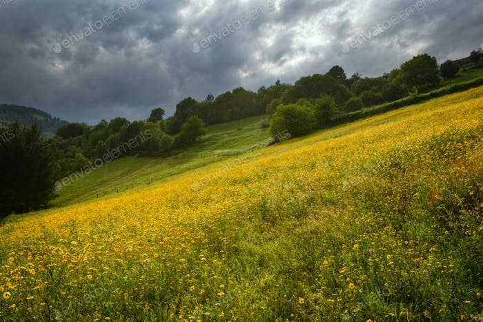 Cloudy and rainy day over the flower-covered meadows