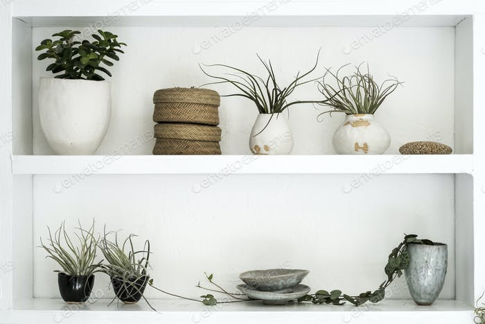 Selection of air plants in terracotta pots and a String of Hearts plant on shelves in a plant shop.
