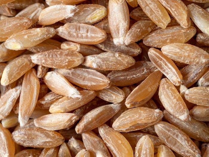 graines d'épeautres comme fond alimentaire
