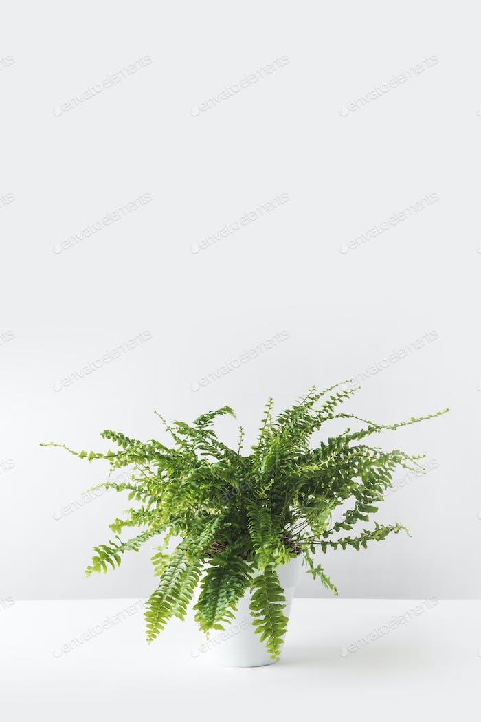 hermosa planta de interior verde en maceta blanca sobre blanco