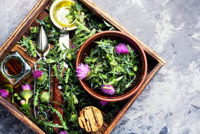 Healing herbs thistle