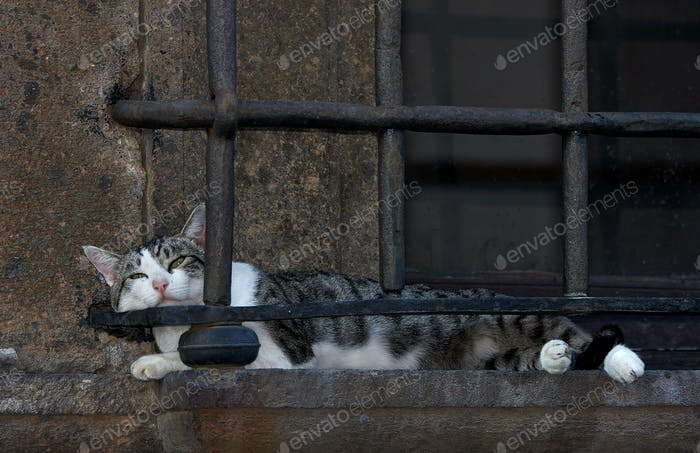 Cat Nap, Nepi Italia