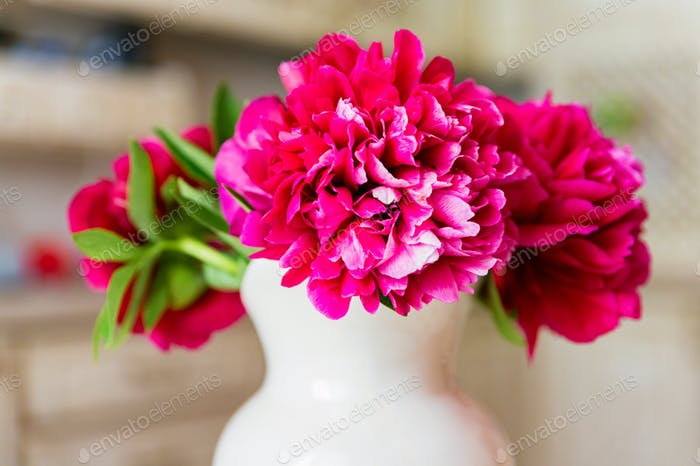 Bouquet of blossoming fuchsia peony in spring