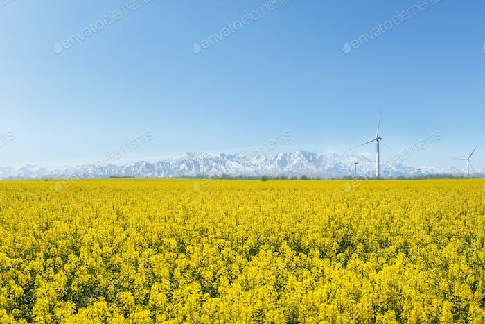 spring landscape in qinghai