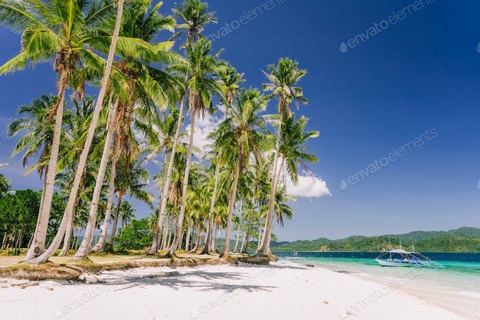 Urlaubsfeeling. Palawan berühmtesten touristischen Orten. Palmen und einsames Inselhüpfen