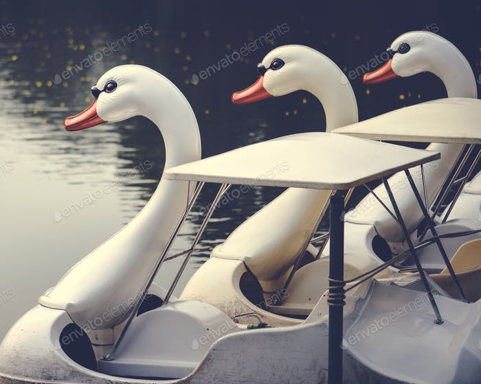 Swan paddle boats in a lake