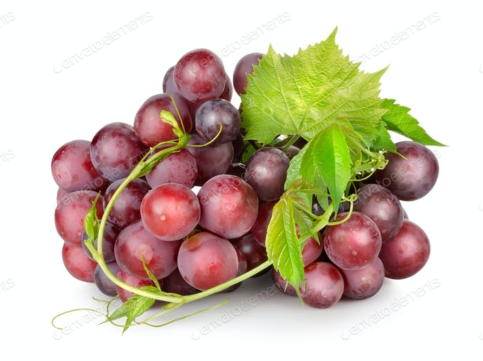 Dark blue grapes with a vine