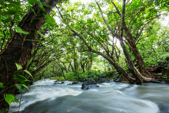 Creek in jungle