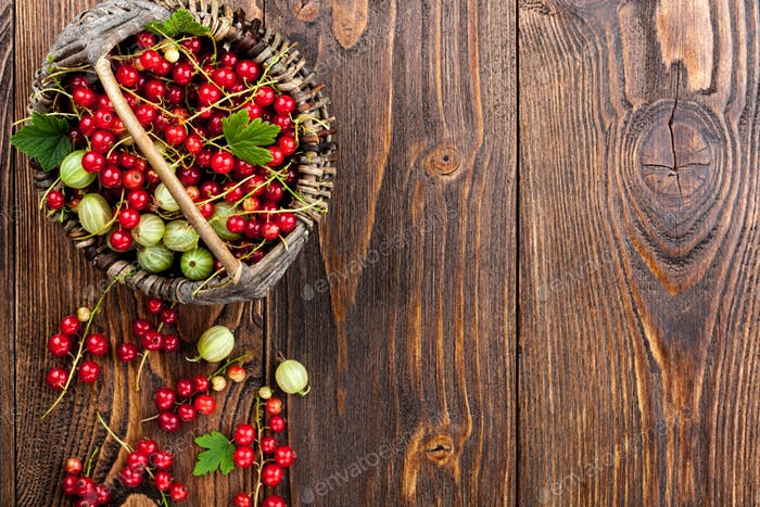 Red currant and gooseberry in the basket