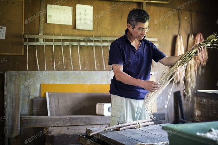 Japanese man in a workshop holding plant twigs and stripping the fibre to making traditional Washi