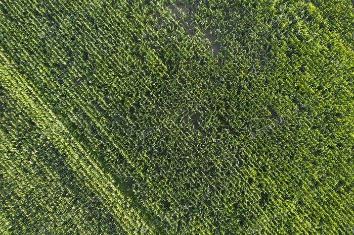 Agriculture aerial view from above.