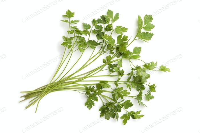 Fresh flat-leave parsley