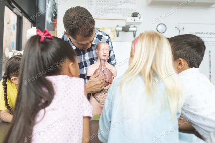 School kids looking at a dummy skeleton presented by their teacher in classroom at school