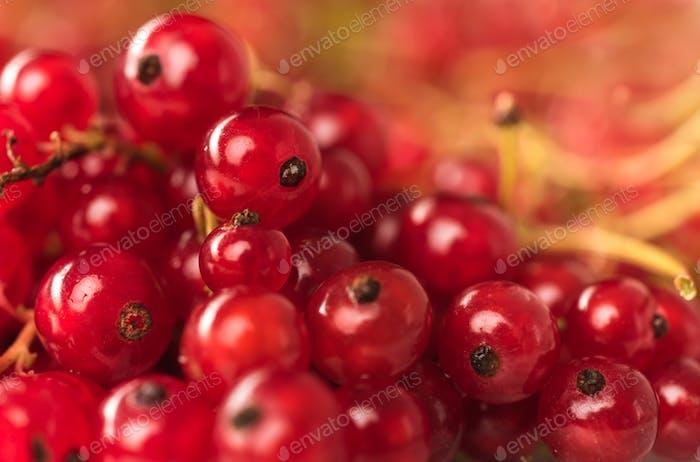 Red currant berries close up. Macro.