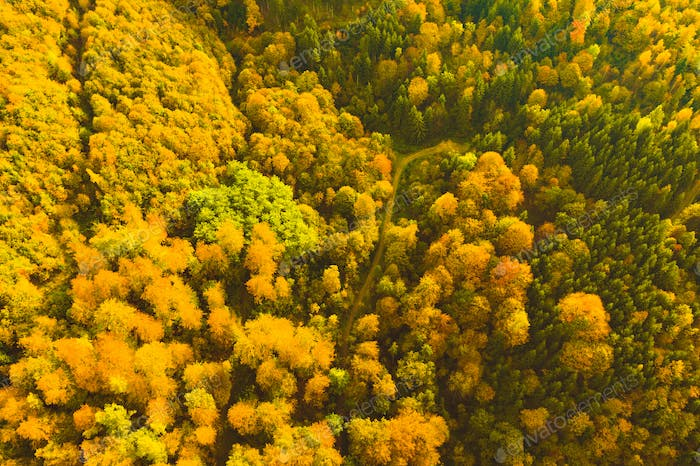 Aerial view of autumn forest in South styrias Green hart of Austria