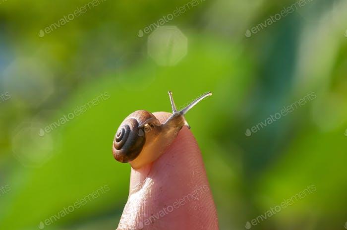 A snail on finger