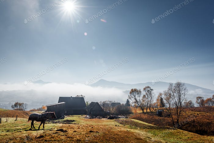 Horse in foggy meadow in mountains valley