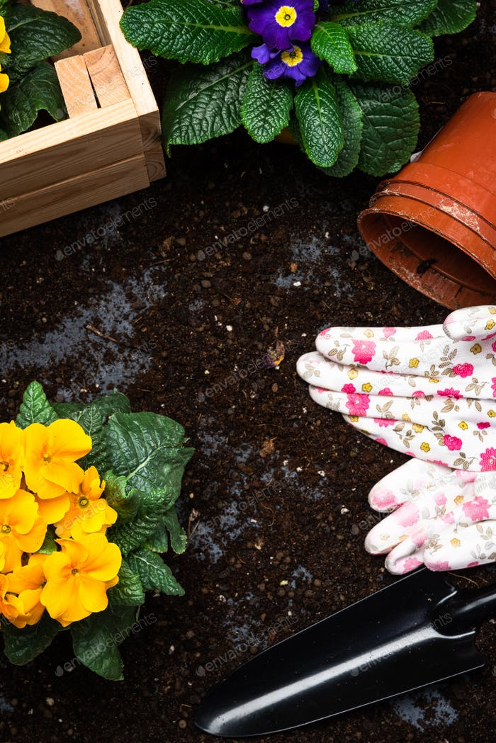 Gardening Hobby and Leisure at Spring Season. Planting Pots and Blooming Flowers. Gardening Tools.