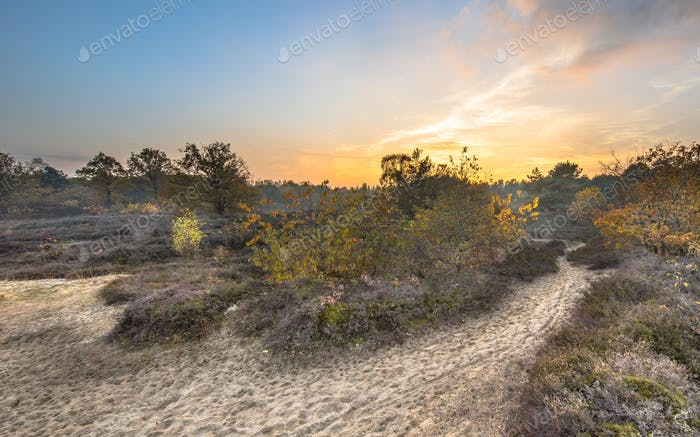 Caminar camino a través de brezales en colores otoñales