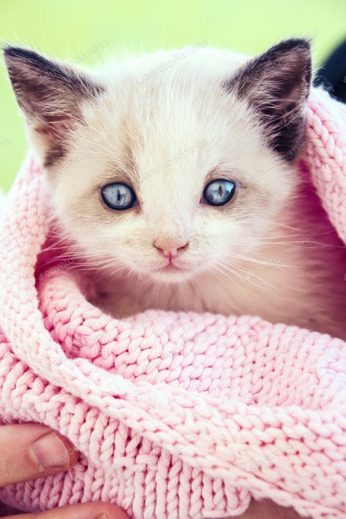 Little and cute cat
