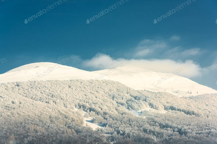 Snowy Bieszczady Mountains in Winter. Snow Covered Trees. Blue Sky and Sunny Day in Poland.