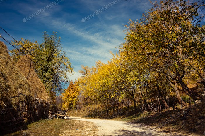 Rural village road in the autumn with colorful trees in Transylvania