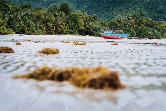 Ship on tropical beach during low tide. Mahe, Seychelles sand lagoon coastline view with palm trees