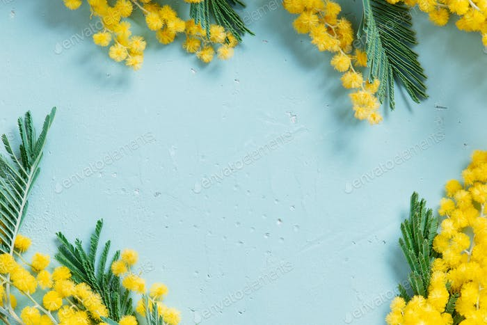 Spring Floral Background with Mimosa
