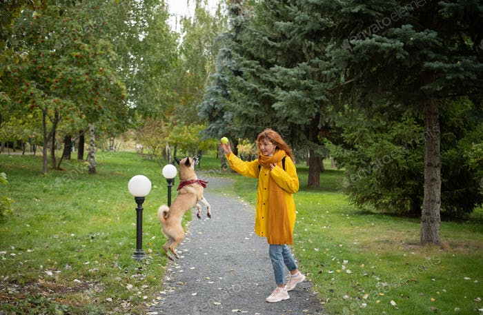 Cheerful woman playing with dog on park alley