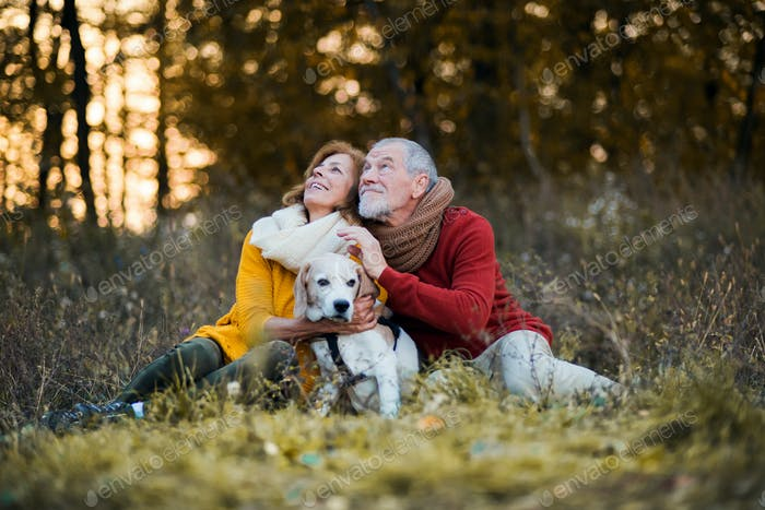 A senior couple with a dog in an autumn nature at sunset.