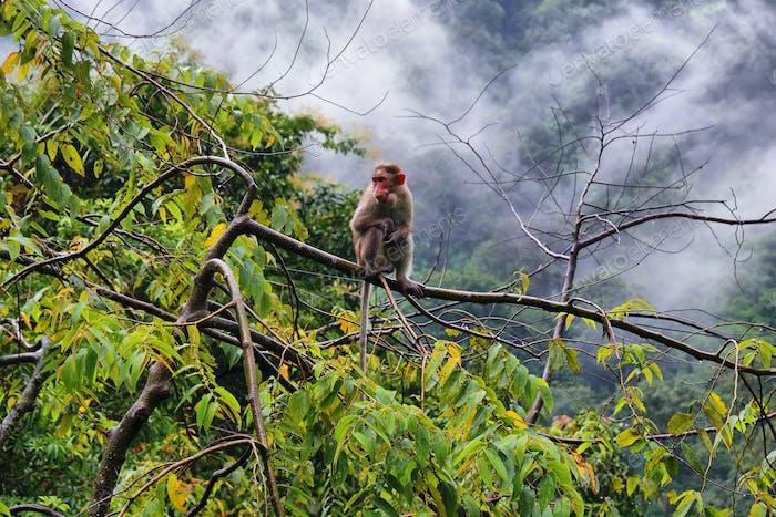 Wild Monkeys near Munnar, Kerala, India