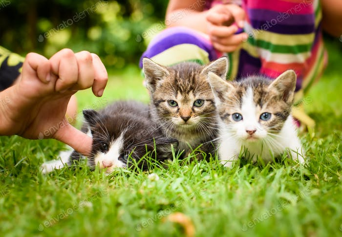 Adorable kittens outdoors on green grass playing with children
