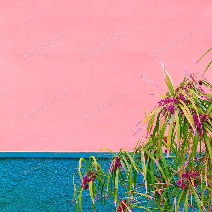 Tropical flowers. Tropical plant. Urban location. Pink wall