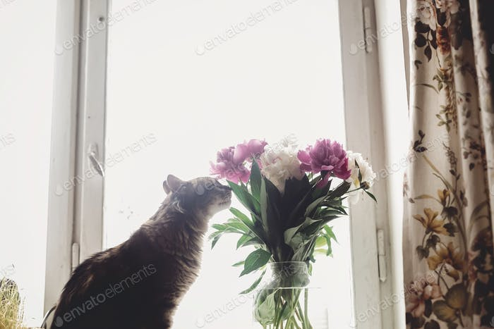 Cat smelling beautiful pink and white peonies bouquet